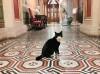 В РФ создан Союз музейных котов